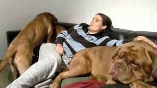 getlinkyoutube.com-Maja und Elmo beim Couchkampf