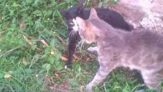 getlinkyoutube.com-EPIC CAT FIGHT 2014