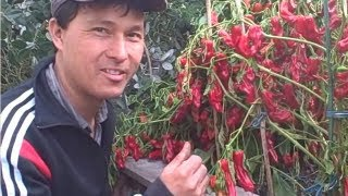 getlinkyoutube.com-Fall Organic Garden Tour - How I grow Fruits and Vegetables in the Front and Back Yard