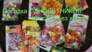 getlinkyoutube.com-100% способ! И вы будете с цветами!