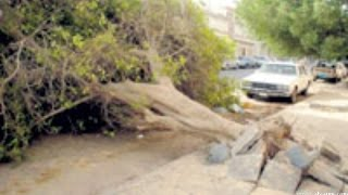 getlinkyoutube.com-اخطر شجرة عربية Dangerous tree