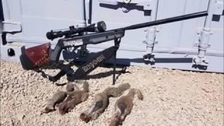 getlinkyoutube.com-Ground Squirrel Hunting with Pellet Gun