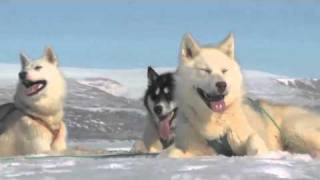 getlinkyoutube.com-Human Planet | Arctic: Greenland sled dogs | Premieres Sunday, 20 March, ABC1