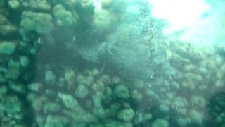 getlinkyoutube.com-My Trip to Tobago's Nylon Pool, Part 2
