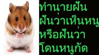 getlinkyoutube.com-ฝันเห็นหนู หรือฝันว่าโดนหนูกัด (พร้อมเลขเด็ด)