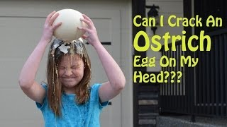 getlinkyoutube.com-Can I Crack an Ostrich Egg on my head? | TruthPlusDare