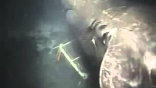 getlinkyoutube.com-Акула МЕГАЛОДОН найдена! Megalodon was in camera
