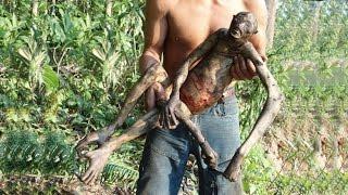 Unknown Creature Found in Amazon