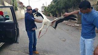 getlinkyoutube.com-سقوط طائر اللقلق بعد ان اصيب بجراح بسبب ما مع جمال العمواسي