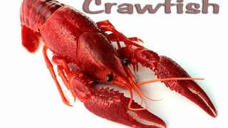 getlinkyoutube.com-Crawfish!!! Catching, Cooking, Cleaning and EATING!!! Deer Meat For Dinner