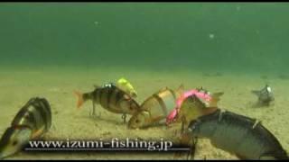 getlinkyoutube.com-IZUMI shad live bait