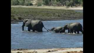 4x4 Trekking in Africa (Part 5 - 4x4 Travel in Namibia - Etosha and Chobe national Parks)
