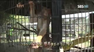 getlinkyoutube.com-동물농장 579회 #7 (애니멀특종-조공원2)