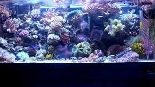getlinkyoutube.com-Most Simple Reef Tank (75 Gallon)
