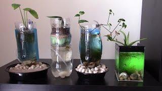 Caring for fish in aquarium of plastic bottle