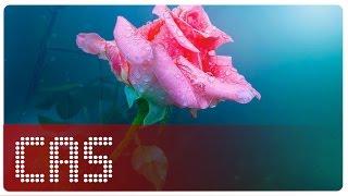 getlinkyoutube.com-► Rain In December  - Mưa Tháng 12 ║ Bosson ║ Vietsub