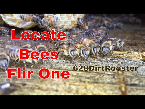 Locate A Honey Bee Hive With A FLIR ONE Thermal Camera for ios