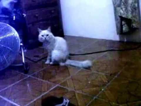 Gringo llorando (gatito)