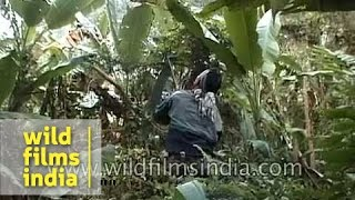 getlinkyoutube.com-Poachers trek into the forest in Nagaland, on a Drongo hunt