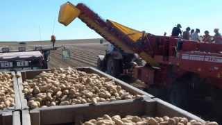 getlinkyoutube.com-Potatoes - The big harvest