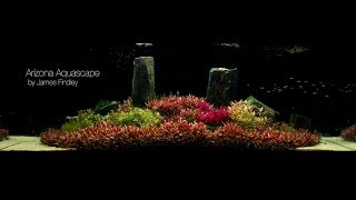 getlinkyoutube.com-Arizona Aquascape by James Findley (1600 Litre) The Making Of