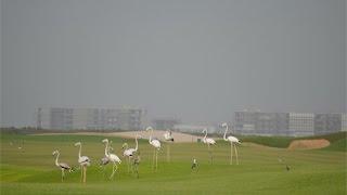 Al Zorah Golf Complex, Ajman, UAE