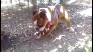 getlinkyoutube.com-Duck and Hen Rooster Mating Breeding video funny animal love