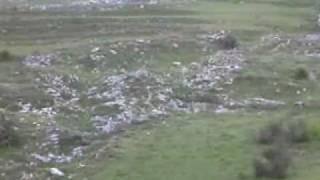 getlinkyoutube.com-benedetto P. a caccia con i suoi segugi a macchiagodena