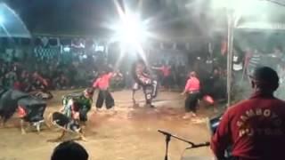 Samboyo putro-celeng srenggi terbaru 2015