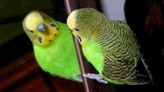 Opie & Anthony: Birds Suck