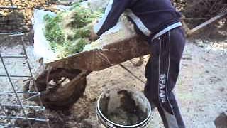 getlinkyoutube.com-نتائج زراعة الشعير المستنبت في العراق