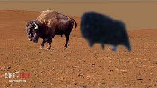 getlinkyoutube.com-¿BISON CAPTADO POR EL CURIOSITY EN MARTE? 9 DE MAYO 2015