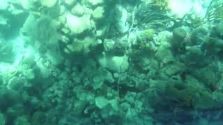 getlinkyoutube.com-Tobago - Buccoo Reef and Nylon pool with glass bottom boat tour