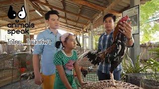 getlinkyoutube.com-Animals Speak [by Mahidol] ไก่ไทย... ไก่นักกีฬา