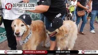 Guinness record Chicago White Sox Dog Day 2016