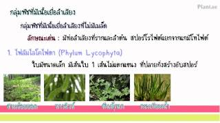 getlinkyoutube.com-อาณาจักรพืช (Kingdom Plantae)