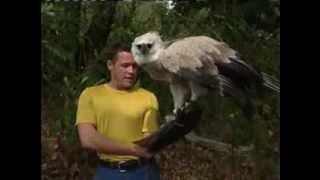 jeff corwin and harpy eagle