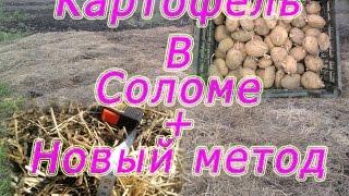 getlinkyoutube.com-Картошка в соломе +Новый метод.