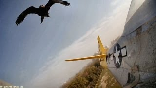 getlinkyoutube.com-Hawk Attacks, Crashes RC Planes