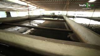 getlinkyoutube.com-สายลับบ้านทุ่ง : เลี้ยงปลาบึกในบ่อซีเมนต์ 26 เม.ย.58 (2/4)