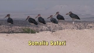 Somalia Safari - Animals of Somalia