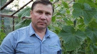 getlinkyoutube.com-ОГУРЦЫ. 3 способа вертикального выращивания плети в теплице