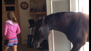 Horse-comes-inside-house-to-chill-with-owner width=