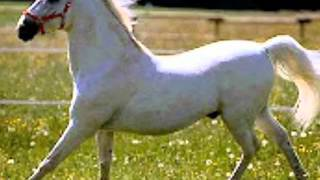 getlinkyoutube.com-se vende un caballo vicente fernandez