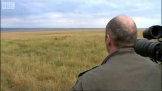 getlinkyoutube.com-Simba Under Attack -  Big Cat Diary - BBC Earth