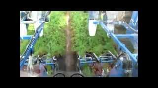getlinkyoutube.com-6 row self propelled toplifter for carrots SP 600