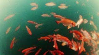 getlinkyoutube.com-Cardume de Olho de Cão e Cavalinha - Pesca com Caiaque - Kayak Fishing - Leogafanha - Dicas