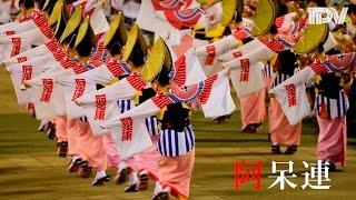 "getlinkyoutube.com-豪快で華麗 阿呆連の阿波踊り ""Aho-ren"": Its Dynamism and Beauty"