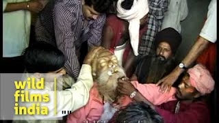 People remove ornaments and tear clothes off Sadhu's body width=