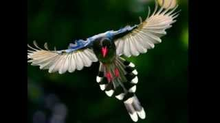 getlinkyoutube.com-LAS AVES MÀS HERMOSAS DEL MUNDO, CANTO DE AVES.THE WORLD'S MOST BEAUTIFUL BIRDS, BIRD SONG.